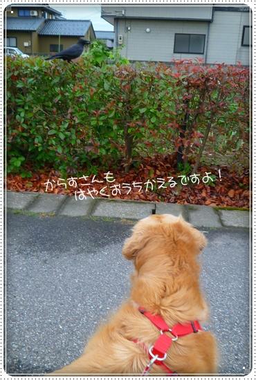 2011,6,27お散歩10
