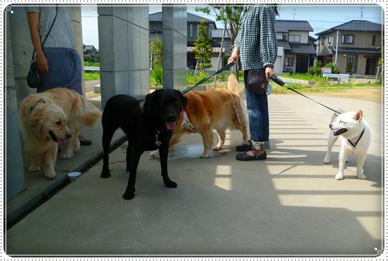 2011,6,28お散歩4