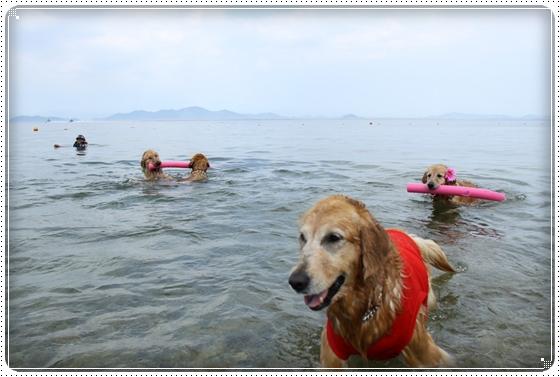 2011,6,29琵琶湖3
