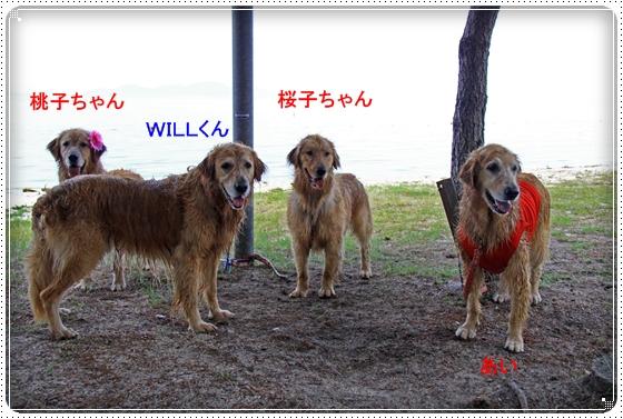 2011,6,30琵琶湖4