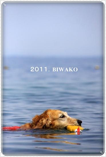 2011,6,30琵琶湖1