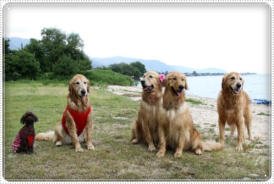 2011,6,30琵琶湖19