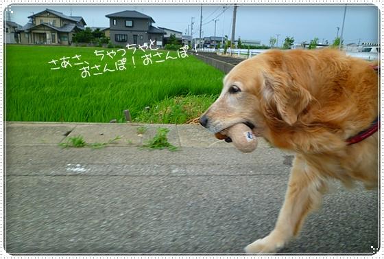 2011,7,4お散歩6