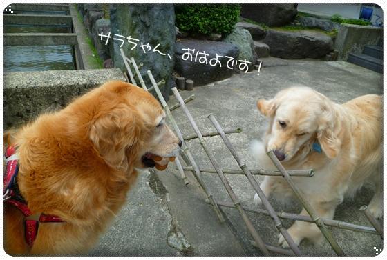 2011,7,4お散歩5