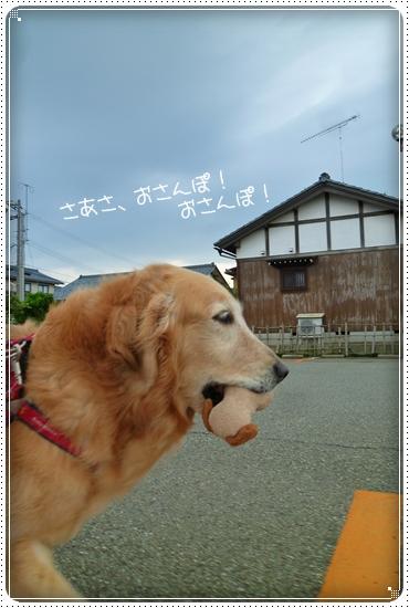 2011,7,4お散歩4