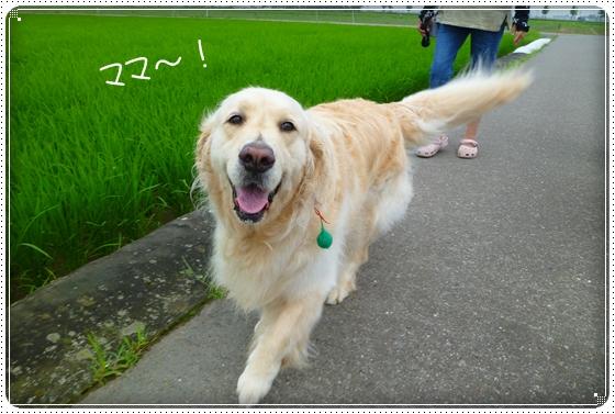 2011,7,5お散歩5