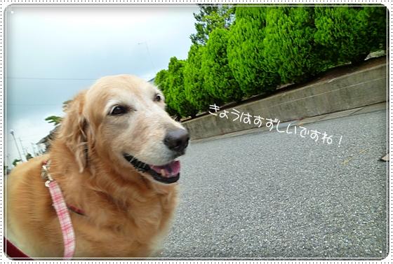 2011,7,5お散歩1