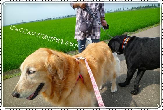 2011,7,5お散歩10