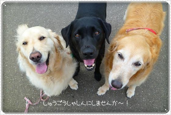 2011,7,5お散歩7