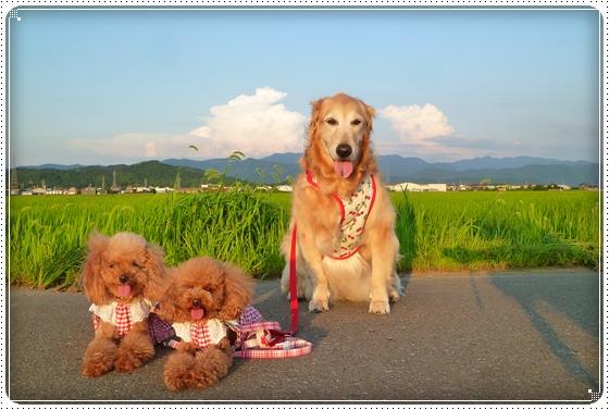 2011,7,10お庭遊び13