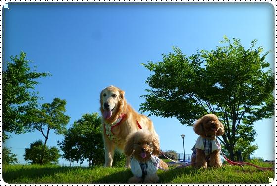 2011,7,11お散歩3