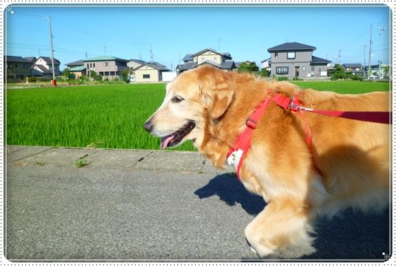 2011,7,11お散歩2