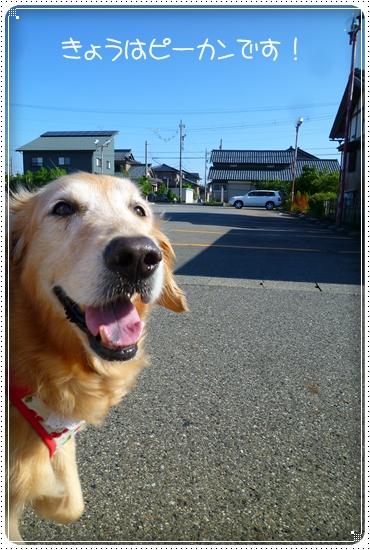 2011,7,11お散歩1