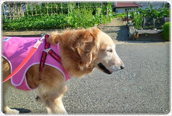 2011,7,17お散歩1