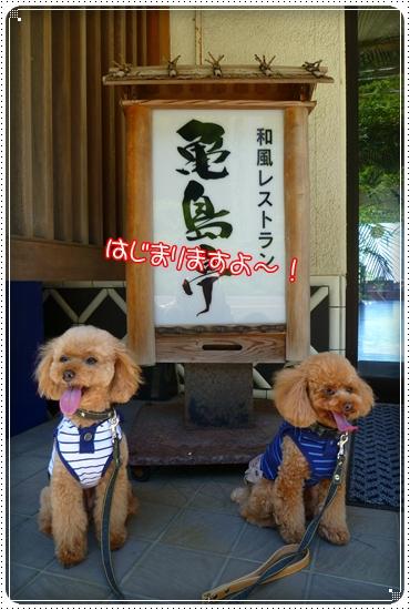 2011,7,17お散歩8