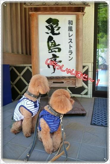 2011,7,17お散歩7