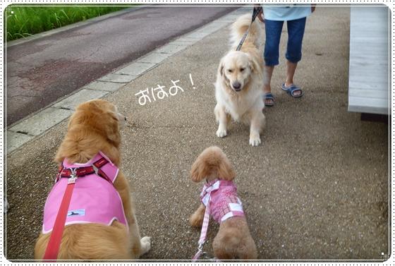 2011,7,20お散歩1