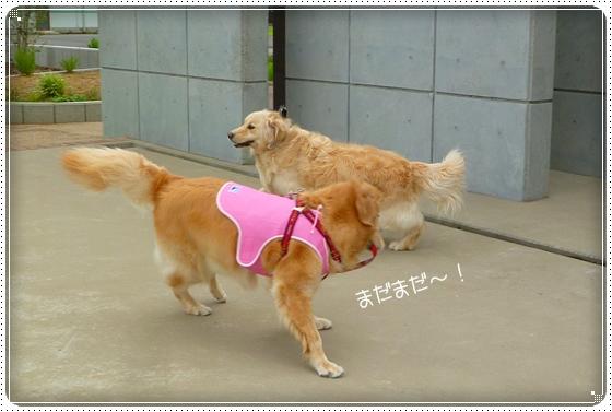 2011,7,20お散歩6