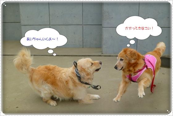 2011,7,20お散歩3