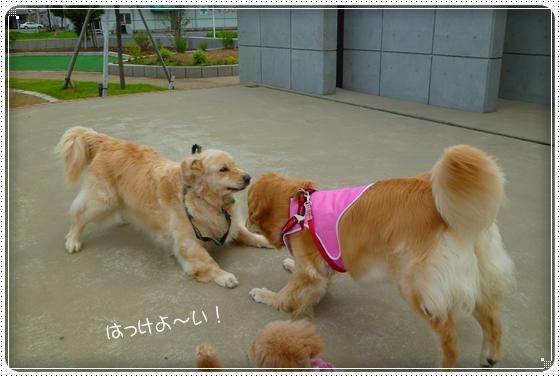 2011,7,20お散歩4