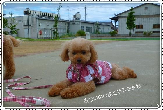 2011,7,20お散歩8