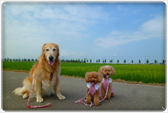 2011,7,24お散歩1