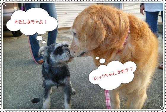 2011,7,24お散歩13