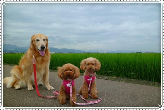 2011,7,28お散歩14