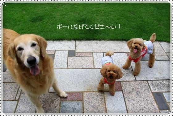 2011,7,28お散歩2