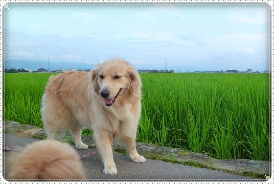 2011,7,30お散歩6