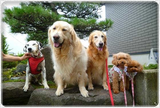 2011,7,30お散歩4