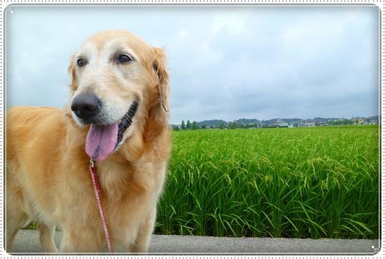 2011,7,30お散歩3