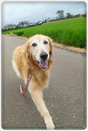 2011,7,30お散歩2