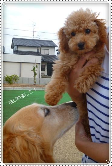 2011,7,30お散歩11