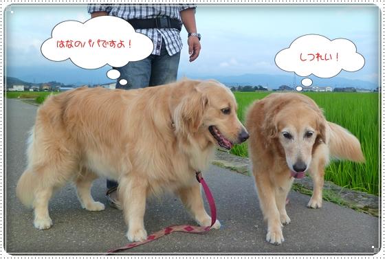 2011,7,30お散歩8