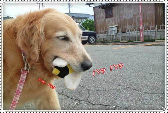 2011,7,31お散歩6