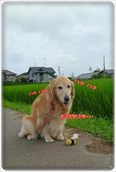 2011,7,31お散歩10