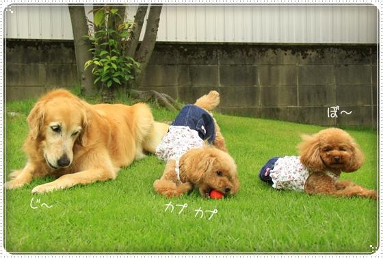 2011,8,1お庭遊び4