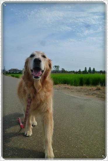 2011,8,2お散歩2