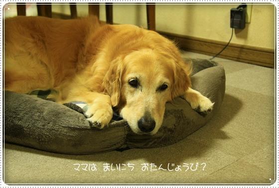 2011,8,3お散歩4