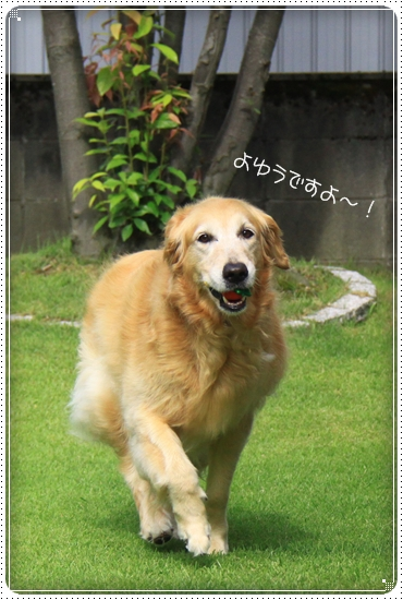 2011,8,5お庭遊び3