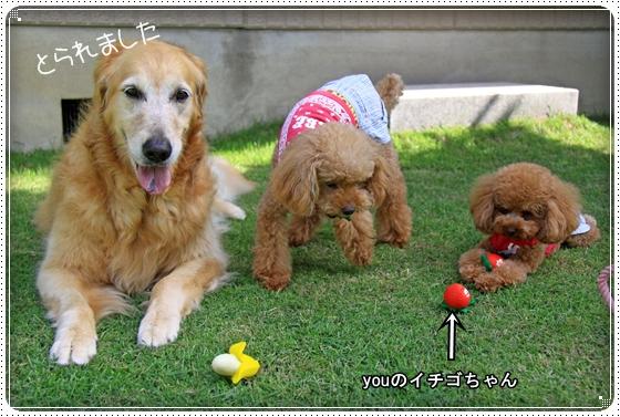 2011,8,7お庭遊び17