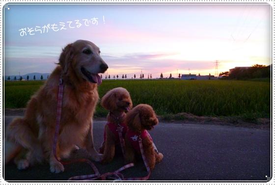 2011,8,8お散歩6
