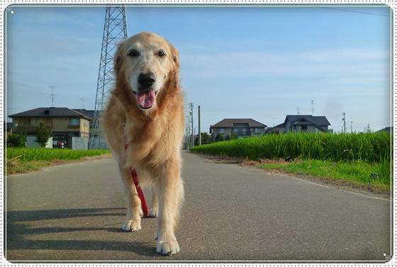 2011,8,8お散歩2