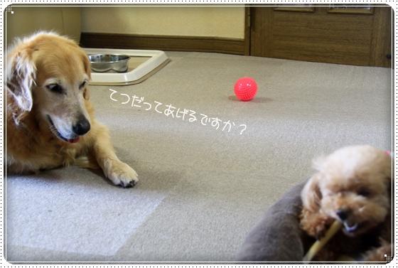 2011,8,9おやつ10