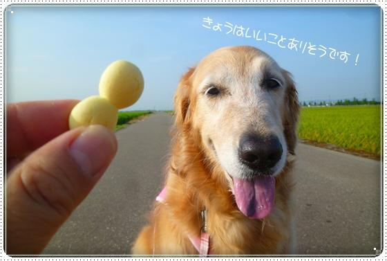 2011,8,10お散歩5