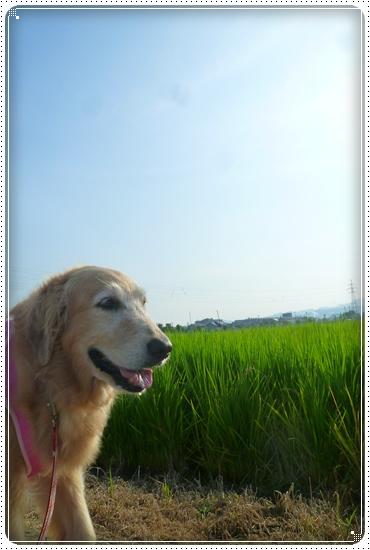 2011,8,10お散歩1
