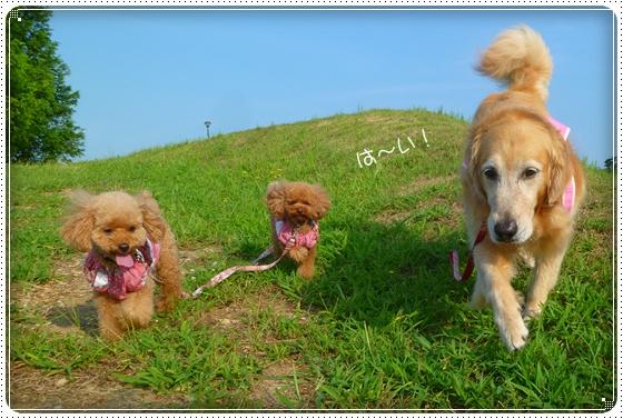 2011,8,10お散歩8
