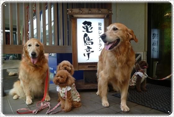 2011,8,11お散歩20