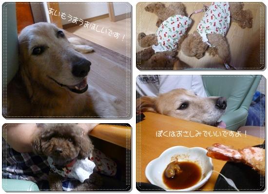 2011,8,11お散歩21